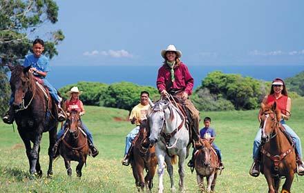 hawai-maui-paard
