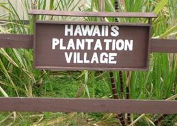 oahu_plantages